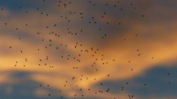 informazioni sulle zanzare